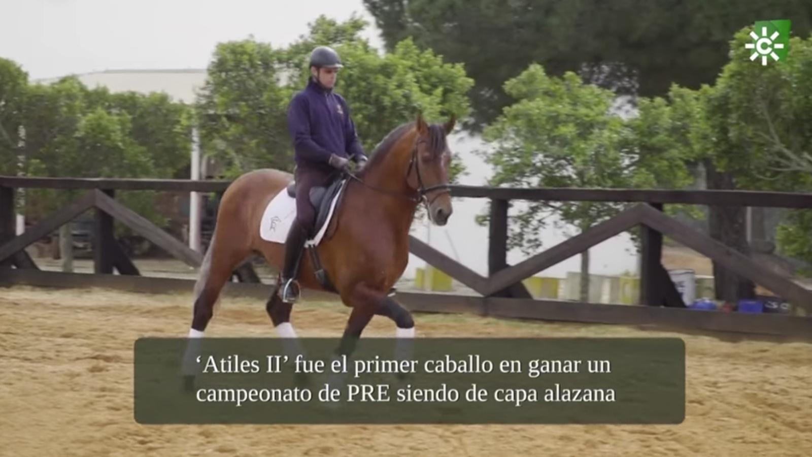 Programa TODO CABALLO CanalSur Televisión